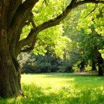 Bioenergetic Landscapes